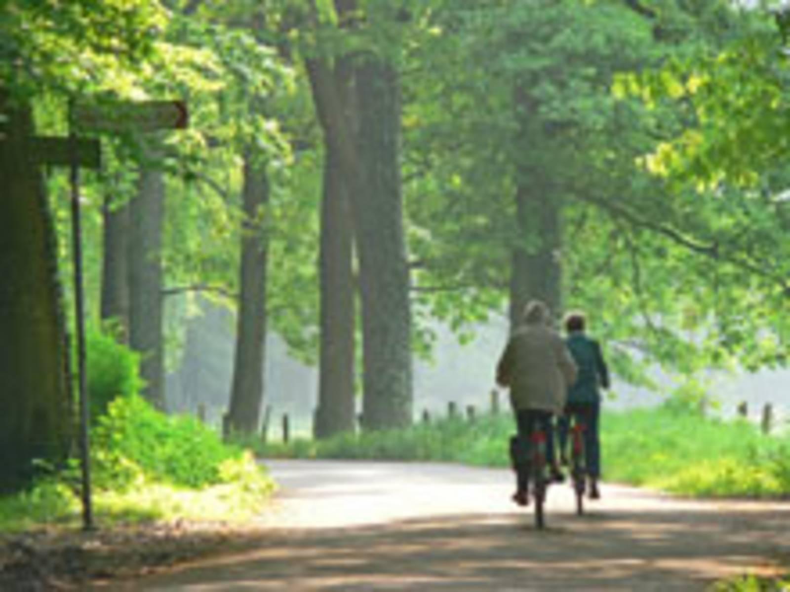 Radfahren in der Allee