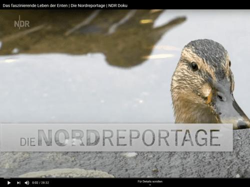 Screenshot einer Reportage, der eine Ente im Wasser zeigt.