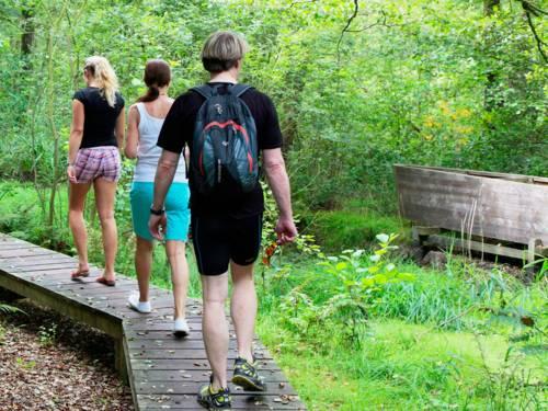 Drei Personen benutzen einen Holzsteg, um das Moor im Naturpark Steinhuder Meer zu erkunden.