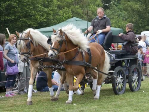 Pferde- und Reitershow des Vereins Burgdorfer Pferdeland