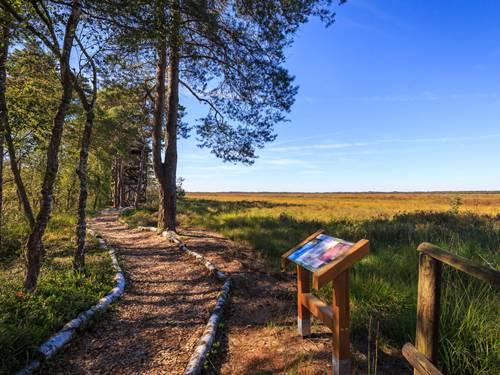 Bissendorfer Moor in der Wedemark
