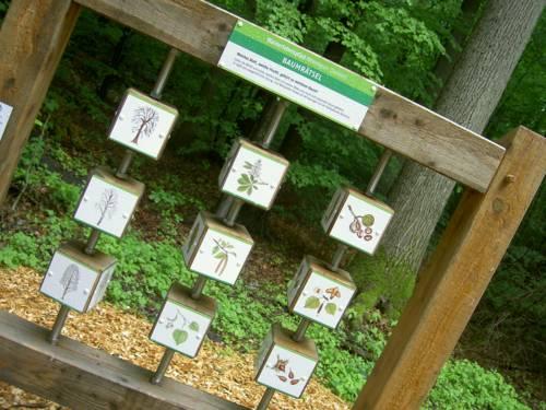 Baumrätsel am Walderlebnispfad