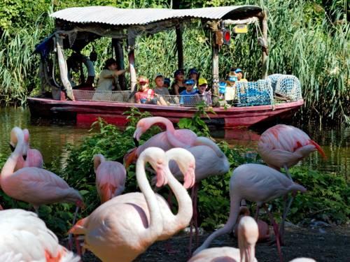 Flamingos im Erlebnis-Zoo