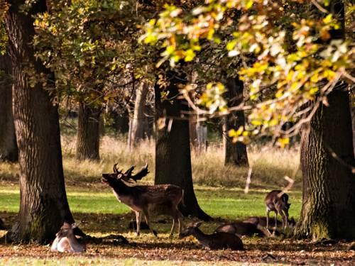 Ein Hirsch und vier Rehe auf einer Waldlichtung