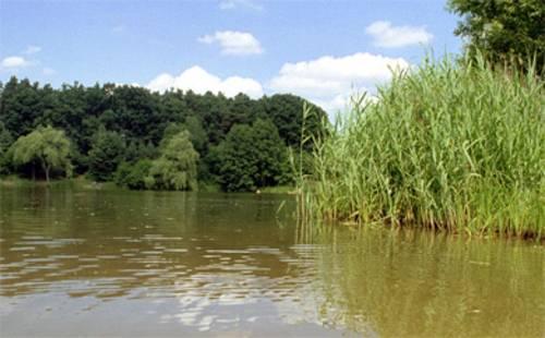 Wasser, Schilf und im Hintergrund Wald