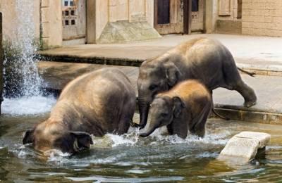 Elefanten im Erlebnis Zoo Hannover