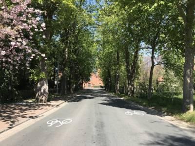 Eine Straße mit Fahrrad-Piktogrammen durch eine Allee