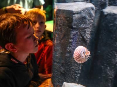 Ein lebendes Fossil.