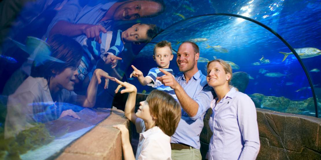 Unterwassertunnel im SealLife