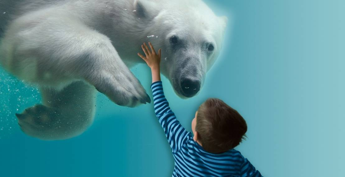 Eine Junge berührt einen Eisbären.