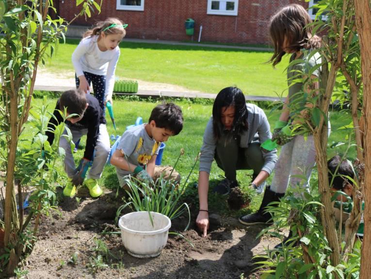 Schulgarten in der Internationalen Schule