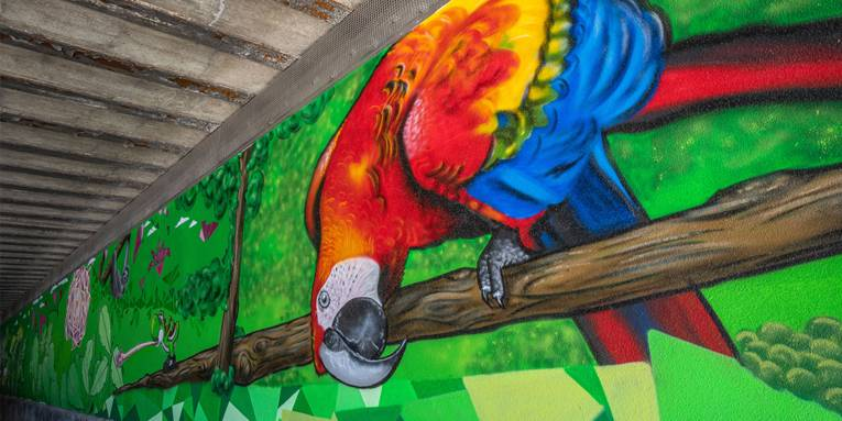 Nordstadt: Papagei in der Kopernikusstraße