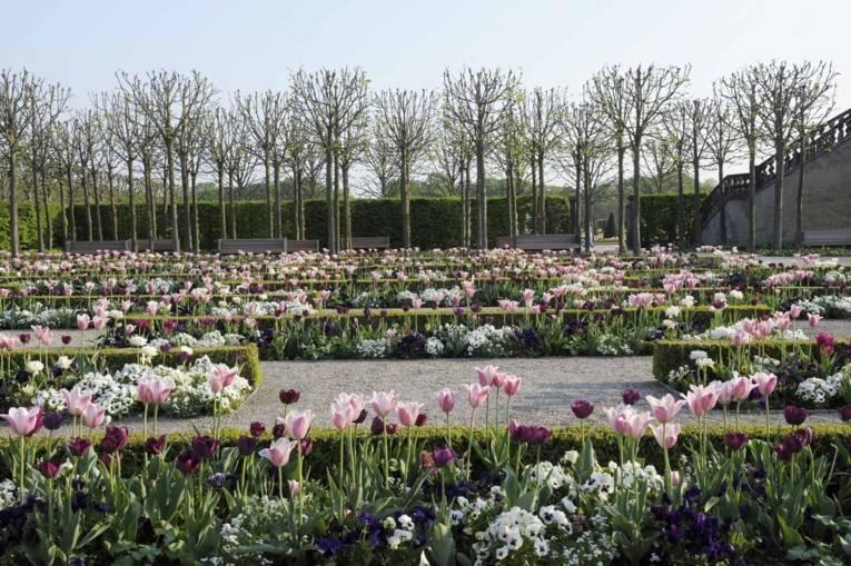 Royal Garden I Flowers