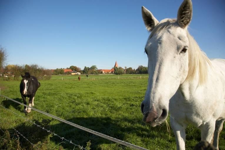 Pferdeland Isernhagen