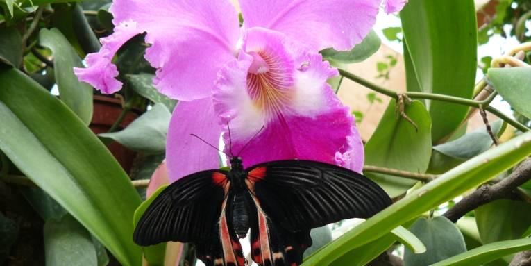 Schmetterlingsfarm Wunstorf