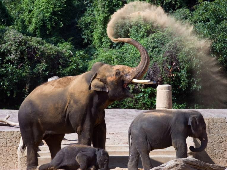 Elefanten im Erlebnis-Zoo