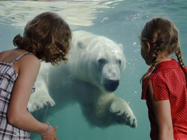 Zwei Mädchen vor einem Becken mit einem Eisbären.