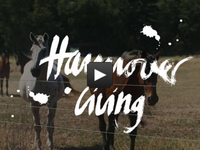 Startbild Pferderegion Video