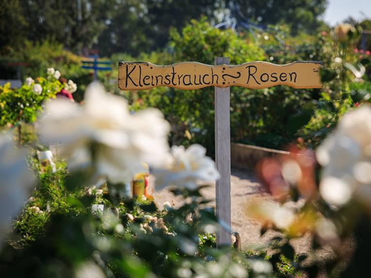 Rosengärten in Hemmingen