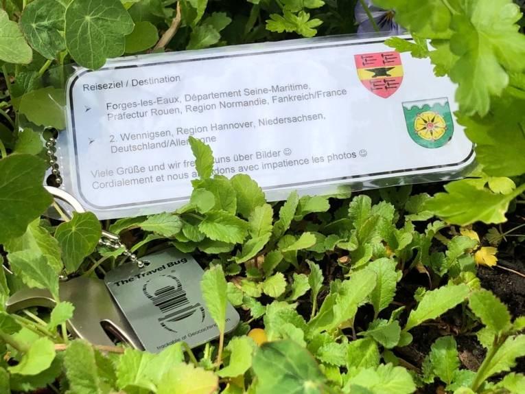 """""""Travel Bug"""": Dieser """"Schatz"""" geht mit den Geocachern auf die Reise in die Wennigser Partnerstadt """"Forges-les-Eaux"""" in Frankreich"""