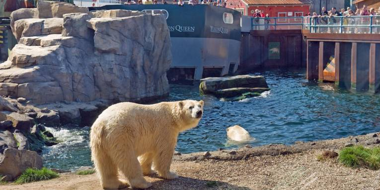 Erlebnis-Zoo Hannover / Yukon Bay