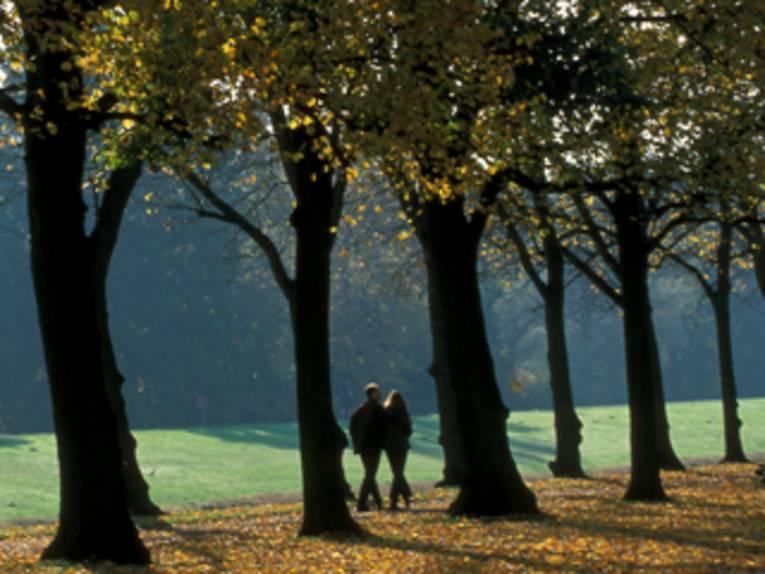Zwei Spaziergänger unter Bäumen. Der Boden ist bedeckt von Laub.