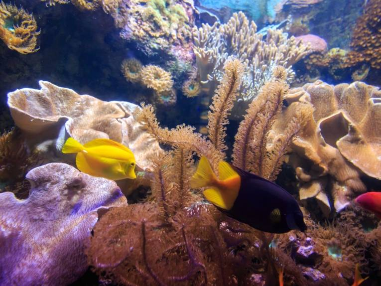 SeaLife Hannover