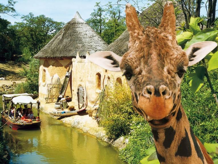 Boot auf einem Fluss. Im Vordergrund das Gesicht einer Giraffe.