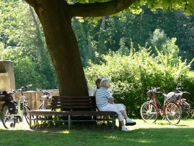 Teilnehmer einer Radtour rasten auf einer Bank unter einem alten Baum