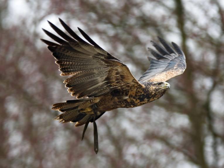 Ein Adler steigt in die Lüfte