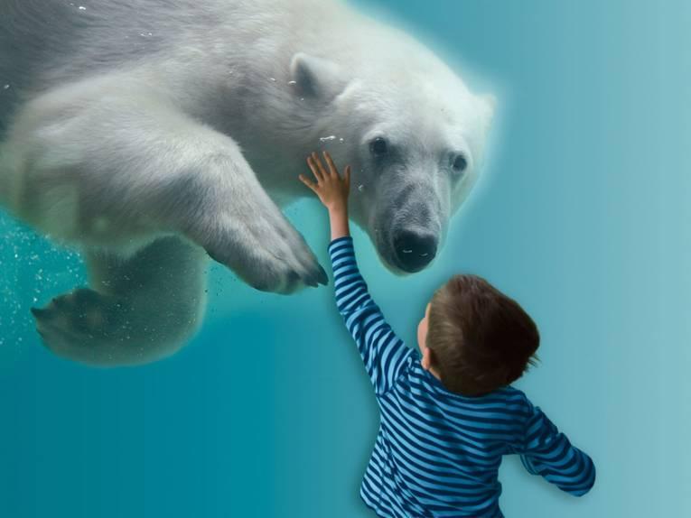 Tauchender Eisbär, ein Junge hinter einer Glaswand beobachtet ihn