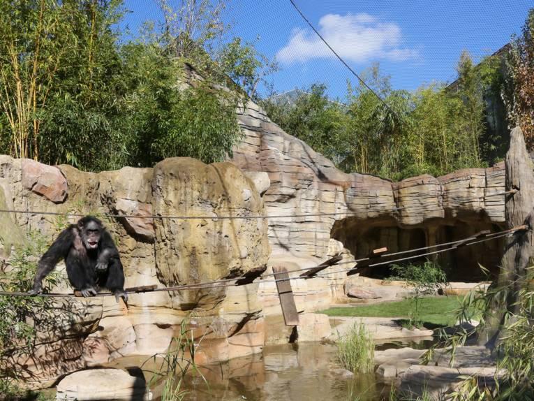 Affe in einer Oase.