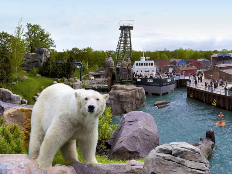 Ein Eisbär vor einem Hafenbecken.