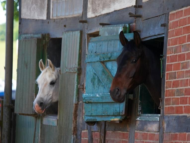 Pferde stehen im Stall