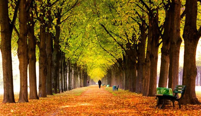 Spaziergang durch das Herbstlaub der Allee im Georgengarten.