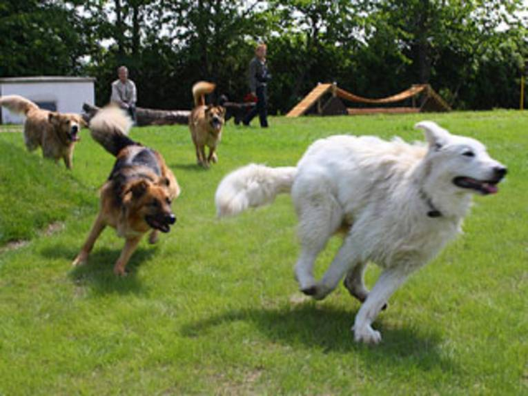 Hunde beim Spielen