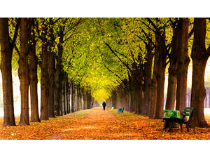 Walk in Royal Garden avenue in autumn
