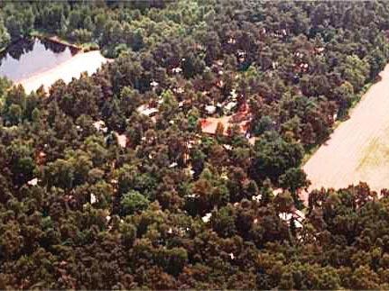 Ein Waldstück, in dessen Mitte ein See liegt.