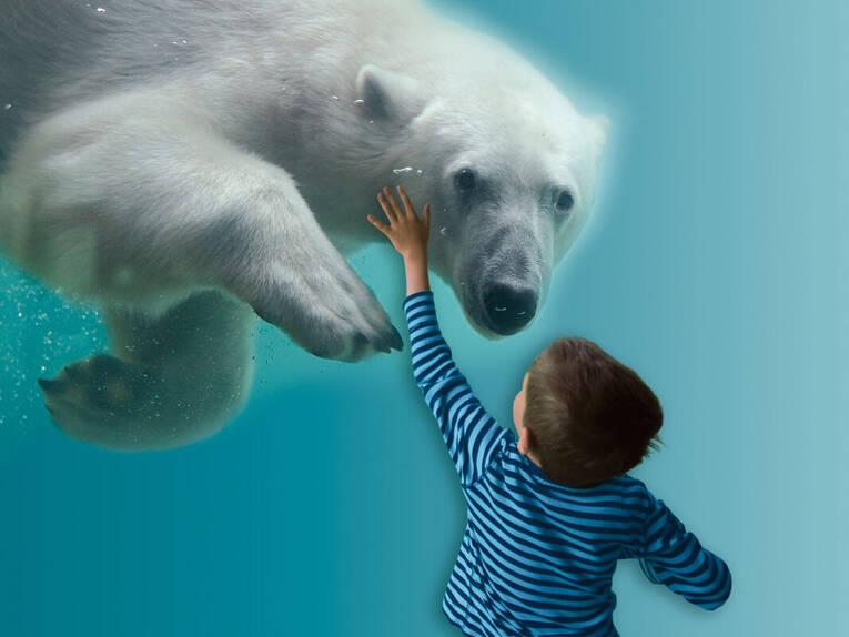 Eisbären Infos