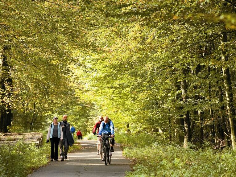 Biking Excursions in the Deister Forests
